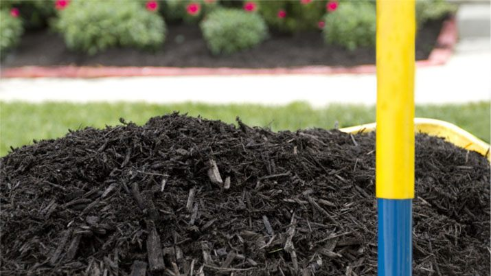 black mulch nj