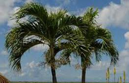 PALM TREES Landscape Hardscape Services Ocean County NJ